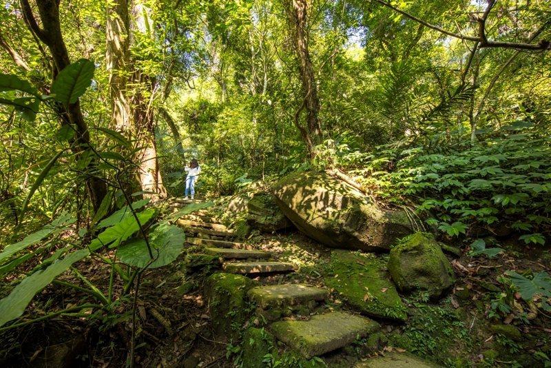 散發芬多精的森林步道。 業者/提供