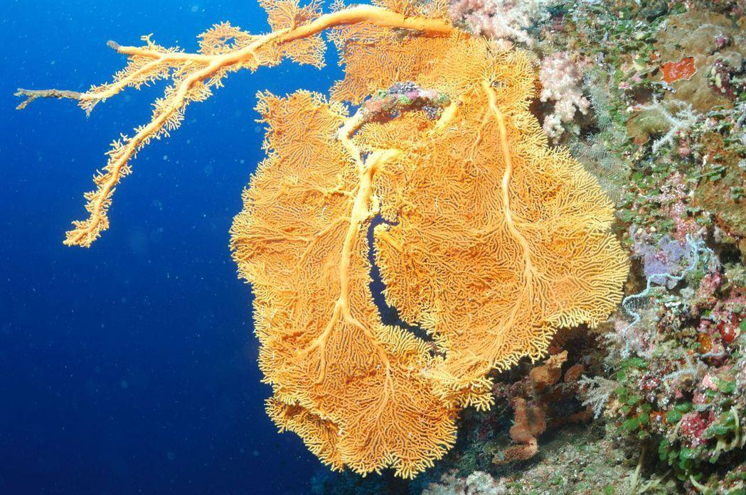 帛琉擁有夢幻的海底景色。  圖/雄獅旅遊提供