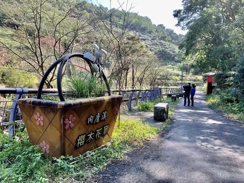 位於平菁街93巷內的溪畔兩側,種有近百株櫻花。  圖/工務局大地工程處提供