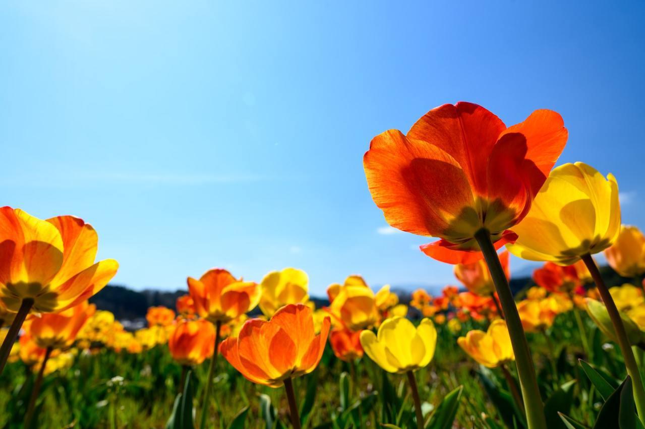 春分的養生之道首重以和為貴、陰陽平衡,此時肝氣旺、腎氣微,宜從健脾胃、祛濕兩大面...
