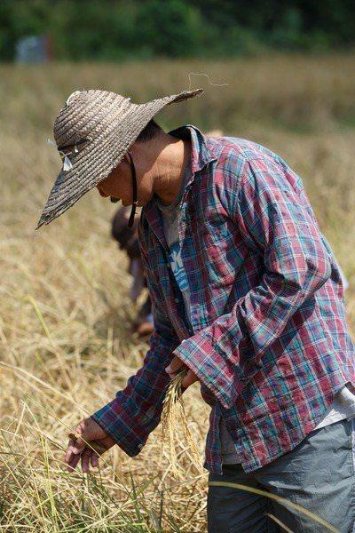 台灣民眾黨立委蔡壁如質疑台農發成立5年來無所作為,全靠農民自行將農產銷陸。(Photo by CEphoto, Uwe Aranas on Wikimedia under CC 2.0)