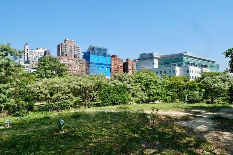 永和四號公園的苦楝樹群,位置在面對圖書館正門的右側方向。這是從高處的小山坡望下所拍的景象。