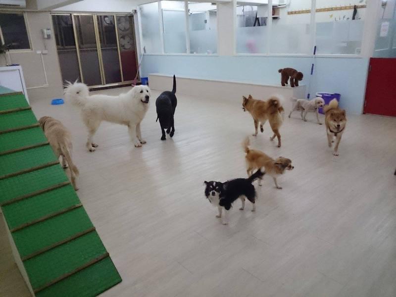 狗狗公園快樂狗旅館室內運動空間寬廣。圖/狗狗公園快樂狗旅館提供