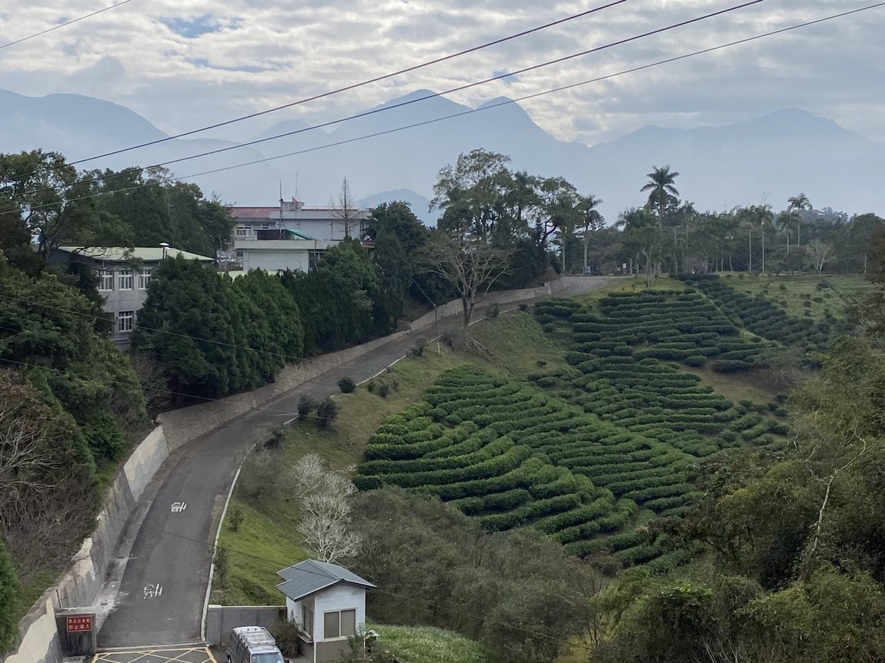 茶改場魚池分場是台灣紅茶的發源地,場外就是阿薩姆紅茶梯田。 圖/江良誠 攝影