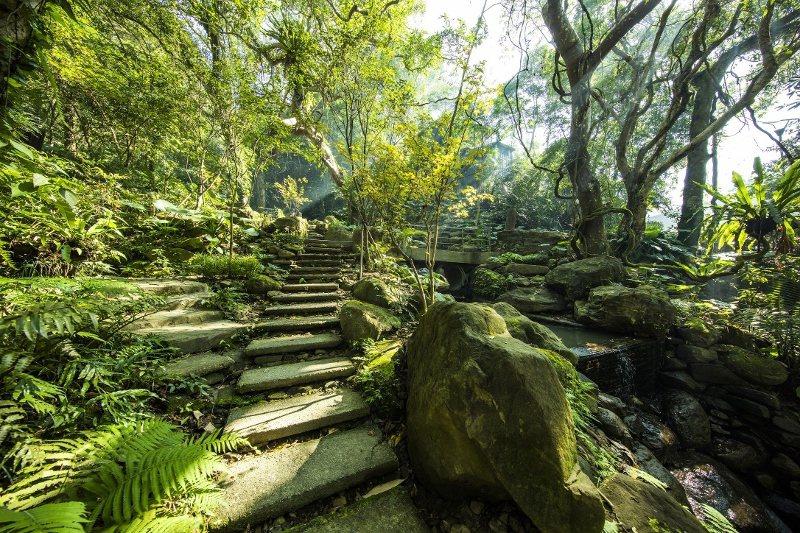 大板根森林園區步道。 業者/提供