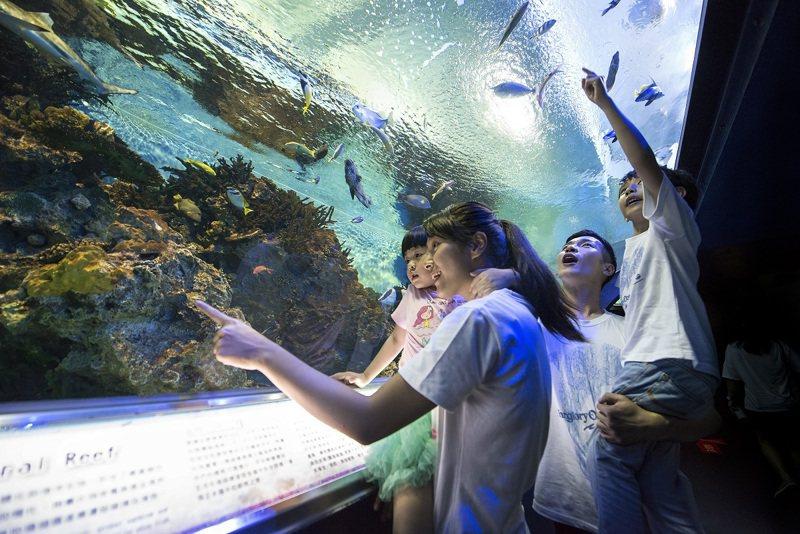 探險島水族館有升級版。圖/花蓮遠雄海洋公園提供