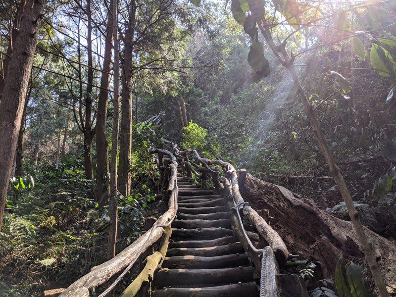 健腳級的大坑4號登山步道。圖/台中市府觀旅局提供