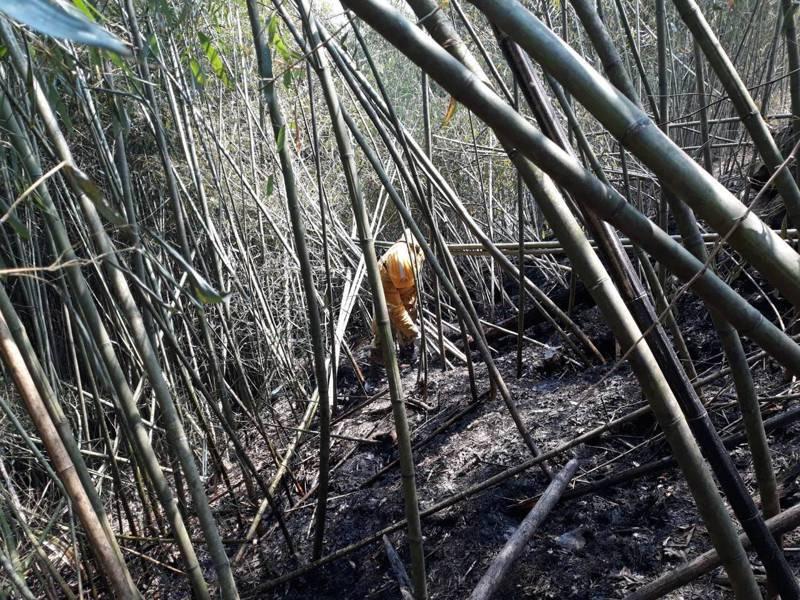 阿里山區邊坡仍有餘火,嘉義林管處人員昨天徒步進入山林滅火。圖/林管處提供