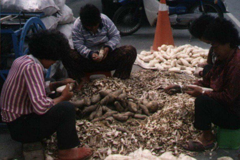 刨成細絲、曬乾到幾乎完全脫水泛白的番薯籤,是澎湖人的傳統主食,至今仍可見於鄉間。 示意圖,與本文所述內容無關。 圖/聯合報系資料照