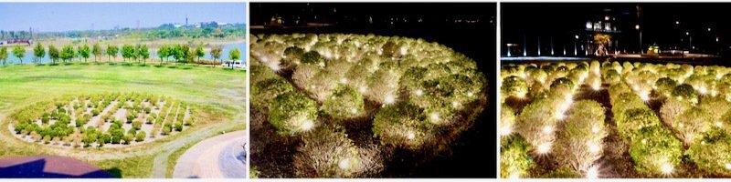 波波草,白天是草,夜晚一球球閃閃發光,照亮了黑夜。