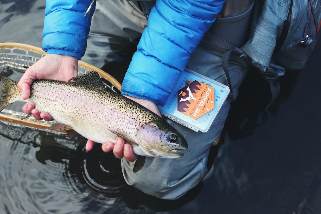 較新鮮的鮭魚肉帶彈性,能稍微判斷是否存放時間過久,或是否反覆退冰。 圖/unsp...