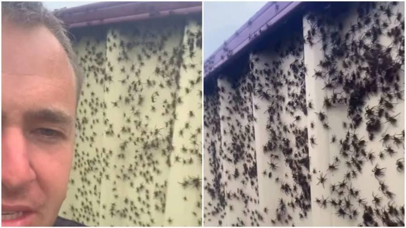新南威爾士省居民洛文福斯(Matt Lovenfosse)當日在Facebook上傳一張有大量蜘蛛湧到一塊田的照片。圖/擷取自香港01