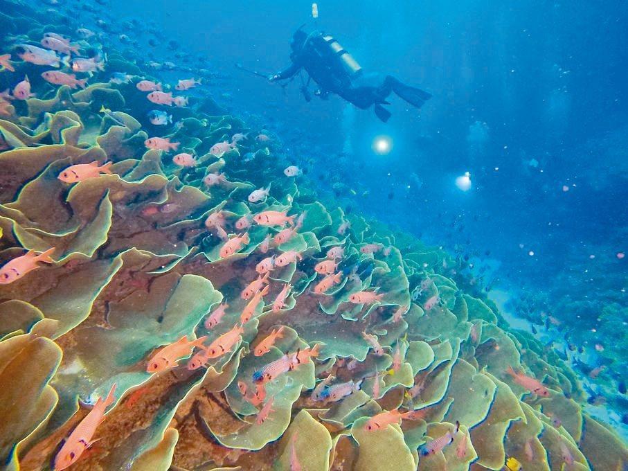 帛琉潛水美景,讓人嚮往。KKday/提供