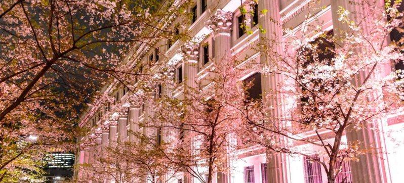 江戶櫻通的夜櫻點燈。(圖片來源:Fashion Press)