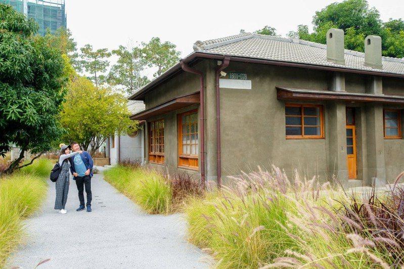 近期台南新景點是水交社文化園區,在佈滿紫葉狼尾草的園區散步好不愜意。