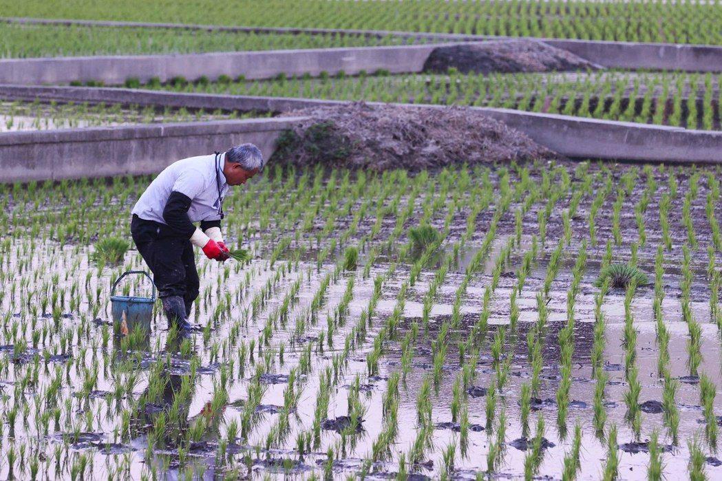 為何僅犧牲農業與農民權益?其他較耗水工業、服務業中的奢侈耗水行業如游泳池、電動洗車等,為何迄今遲未見限制?示意圖。 圖/聯合報系資料照