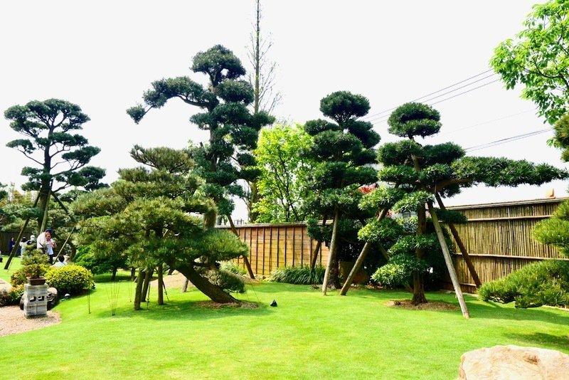 畫面左方的二顆羅漢松,一棵有雕塑樹型,另一棵任其自然發展,兩相比較,經過雕塑的樹型長的乖,會隨著雕塑的方向往旁延伸,未經雕塑的只會往上長,另一種野性的味道。