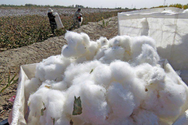 新疆棉事件給大陸上了一課。圖/新華社