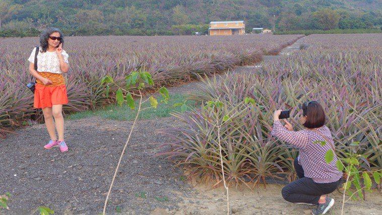 台南市藥師公會結合餐廳業者推出鳳梨養生系列大餐,吃大餐還可以到附近的景點欣賞大片...