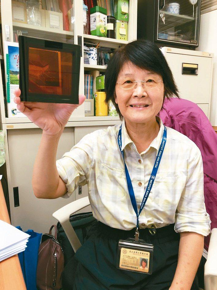 台大材料系特聘教授林唯芳展示新世代鈣鈦礦太陽能電池。林唯芳/提供