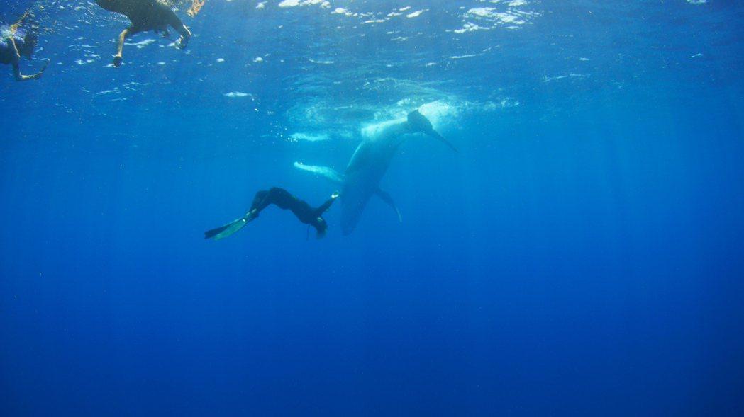 「男人與他的海」畫面優美,內容深具教育性。圖/牽猴子提供