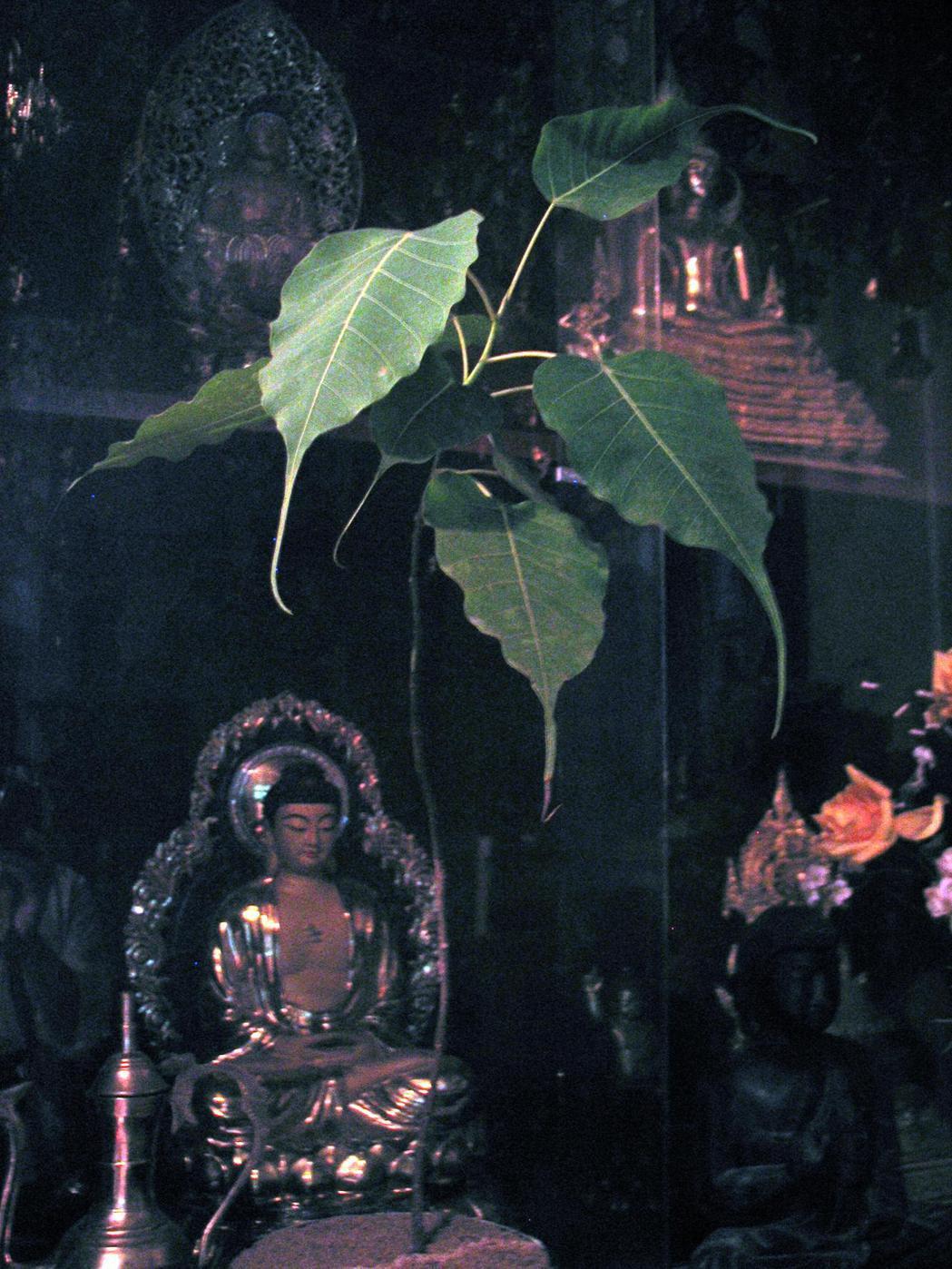 《菩提計畫》是李明維(右)至今想起來仍會感到心動的作品。圖/李工作室 提供