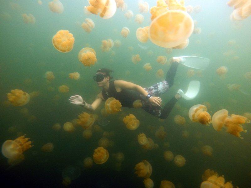 帛琉旅遊泡泡首發團明日出發,雄獅旅遊一共有43名旅客已額滿,但後續梯次銷售未滿5成,顯現沉重賣壓,消費者還是對帛琉泡泡旅遊有相當的猶豫。圖為帛琉特有的金色水母湖。圖/雄獅旅遊提供