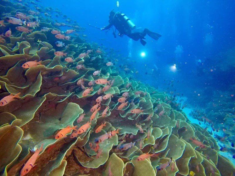 帛琉潛水美景。圖/KKday提供