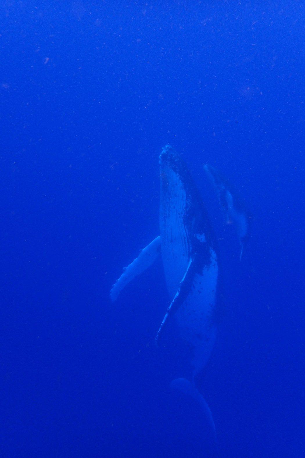 導演黃嘉俊透過鏡頭捕捉到許多鯨魚噴水、海豚飛越等珍貴畫面。圖/牽猴子提供