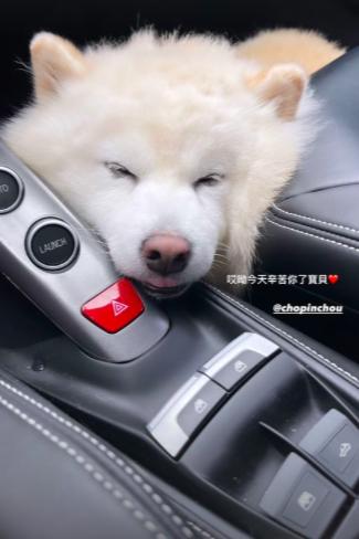 周興哲愛犬蕭邦應援宛如粉絲見面會,回程累到睡翻。圖/摘自IG