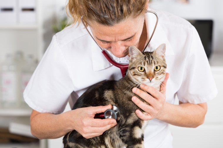 貓咪看診示意圖。 圖片來源/ingimage