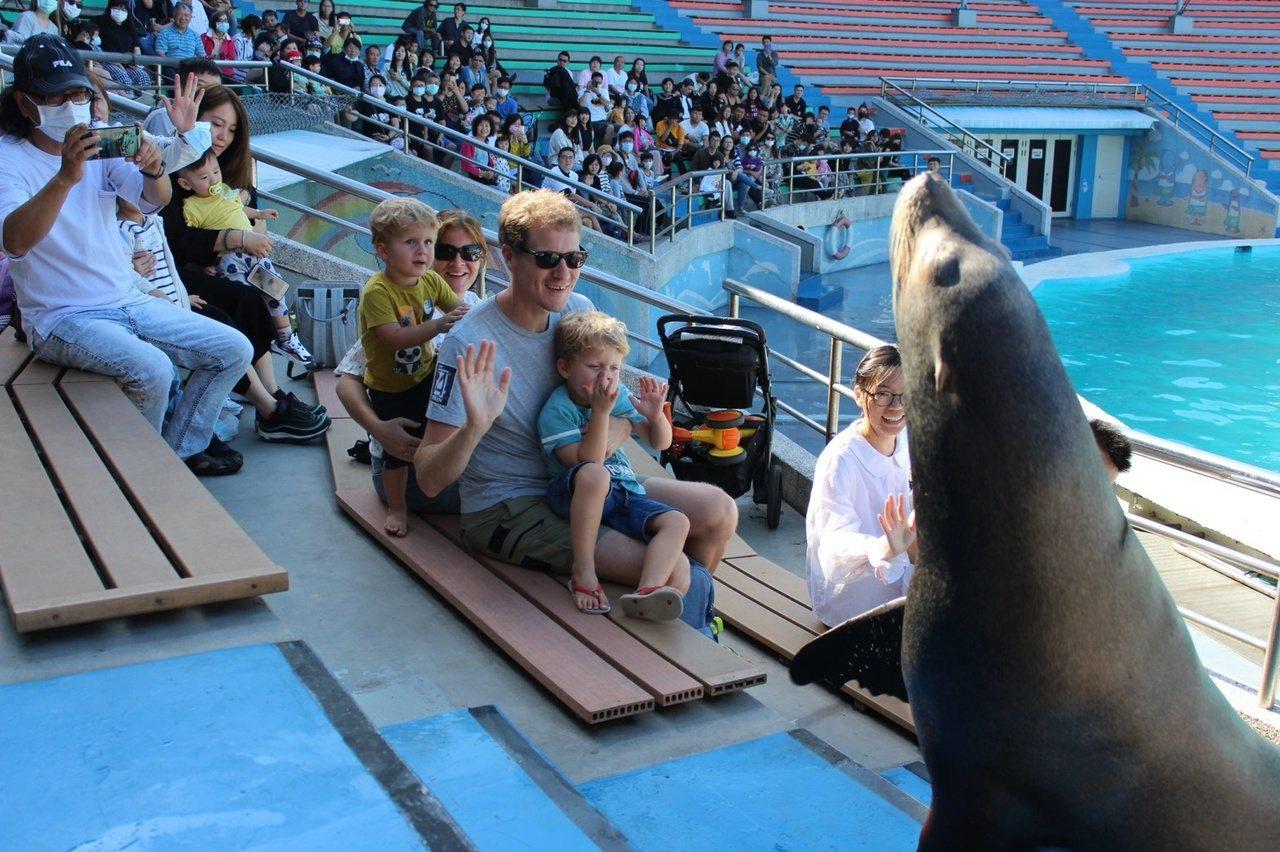 海獅秀常常吸引大批民眾來觀賞。 圖/新北市動保處提供
