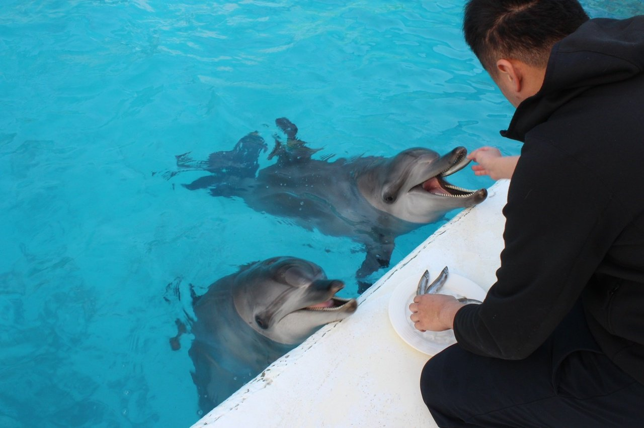 海豚與訓練員間的羈絆不禁讓人深感佩服。 圖/新北市動保處提供