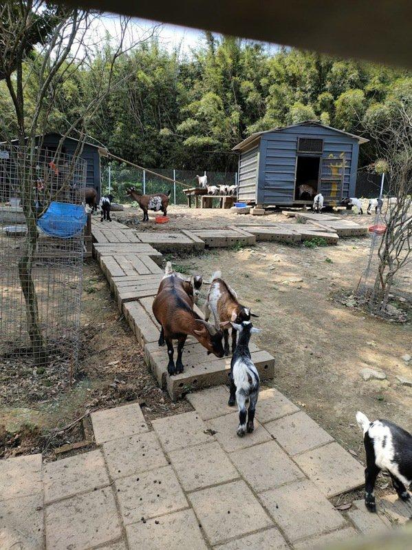 鹿羽松去年才剛開幕,園區不大,但有許多特色動物。還有跳跳羊、綿羊豬、草原貓等.....