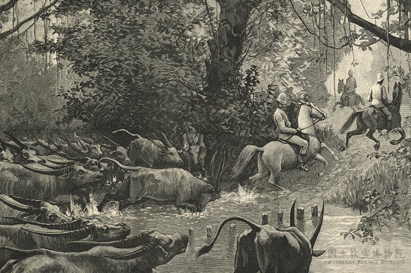 1890 E. H. Grimani, Sketches in Formosa: a hazardous descent; pursued by water-buffaloes(格利馬尼南部遊踪圖之三), The Illustrated London News 國立故宮博物院藏 購圖000009