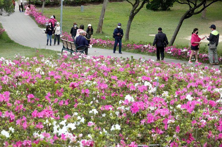 圖為台北杜鵑花季。 示意圖/聯合報系資料照片