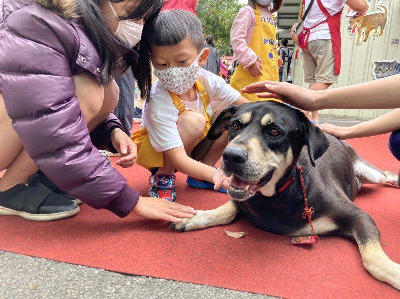 板橋生命教育園區公關犬「大頭」。圖/新北市動保處提供