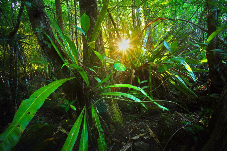 由於樹木會吸收排碳,砍伐森林對降低氣候變遷會造成嚴重影響。 (Photo by Big Cypress National Preserve on Flicker under Creative Commons license)