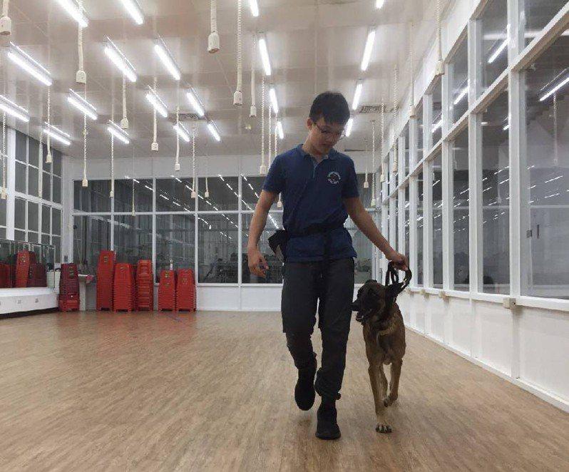 高雄市動物保護處推動「送浪浪上學趣」計畫,經過專業訓犬師調教,浪犬性情行為更穩定,民眾認養意願也提高。圖/高雄市動保處提供