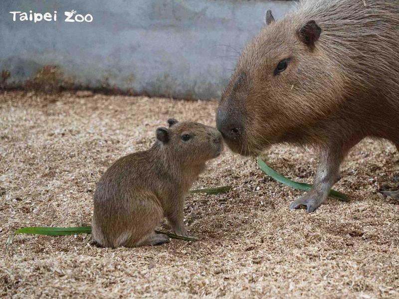 圖/北市動物園提供