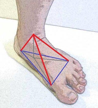 可以把足踝看成是一個三腳架,站立時,形成一個平衡省力的結構。圖/陳沛裕醫師手繪