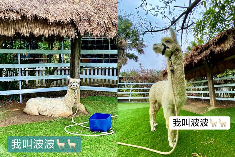 圖/青林農場臉書專頁