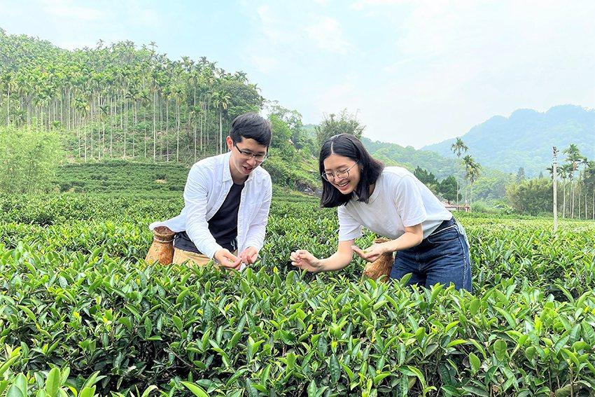 「陶茶之旅」穿梭茶圖尋覓一心二葉採菁的感動。 陶博館/提供