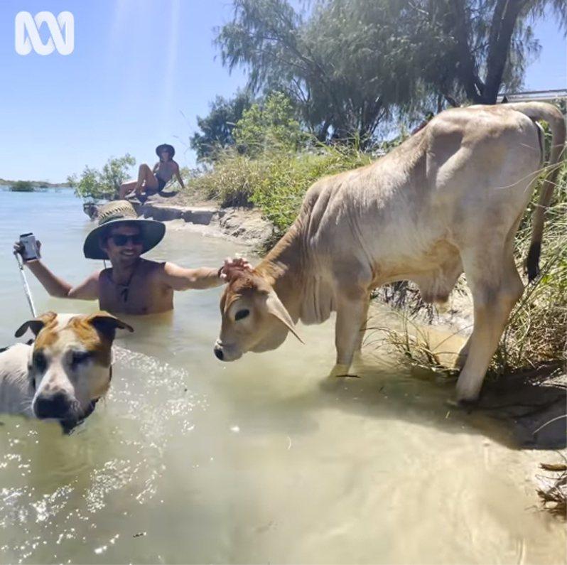 飼主帶著小牛跟狗兒一起到湖邊戲水。圖/取自abc