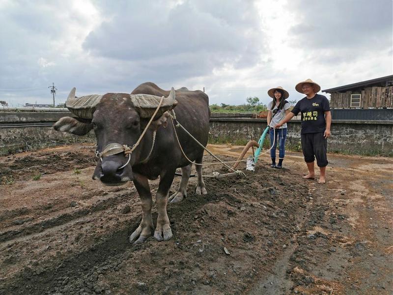 ▲跟著食物去旅行-宜蘭放牛班的「黃金」假期。(圖/Tripbaa趣吧!自由行專家)