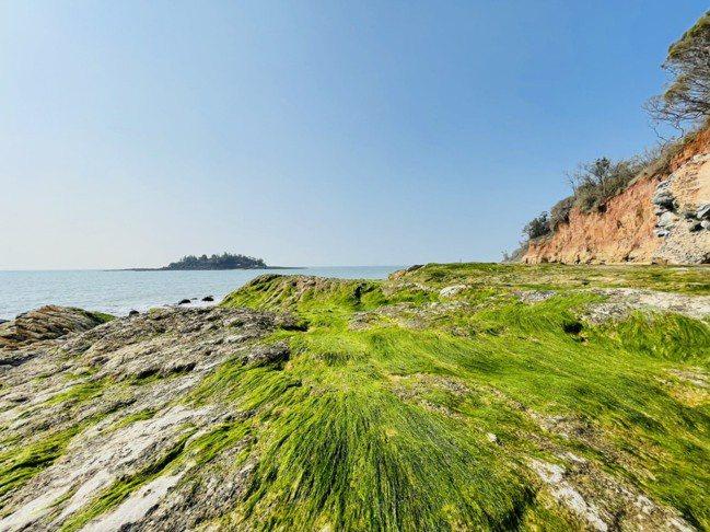 3~5月季節限定的「綠石槽」,是小金門最近掀起的打卡熱點。記者羅建怡/攝影