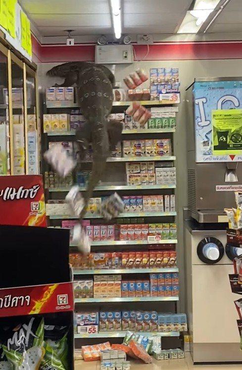 泰國一間超商遭巨蜥亂入。圖/翻攝自「Jejene Narumpa」臉書