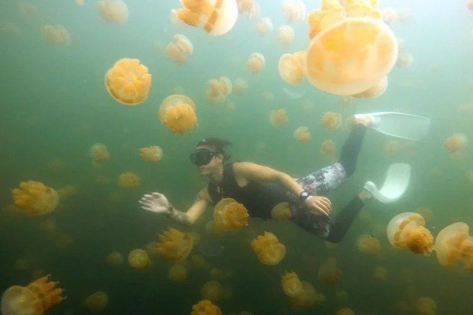 獨/怕旅遊泡泡變泡沫!帛琉砍機位限制、還補助美金