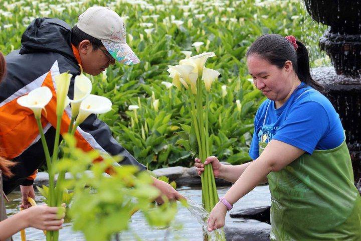 北市產業發展局舉辦的芋你一同踏尋竹子湖之美,限定遊程開始報名囉。 圖/北市產業發...