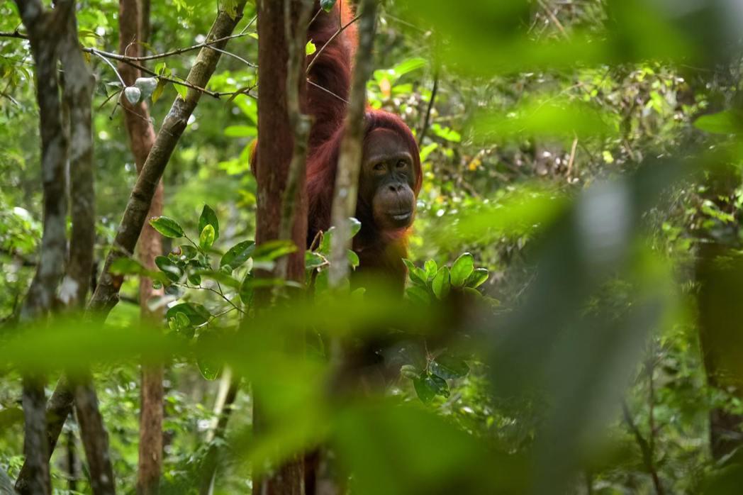 生物多樣性損失,也排進剛剛出爐的世界經濟論壇《全球風險報告》中。 圖/Unspl...
